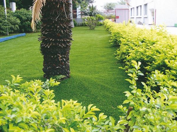 đặc điểm cỏ nhân tạo sân vườn 1