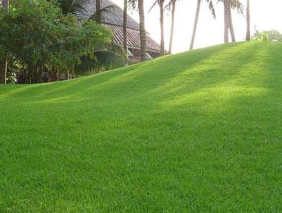 Vì sao cỏ nhân tạo trang trí lại thay thế cỏ nhung Nhật trong trang trí sân vườn