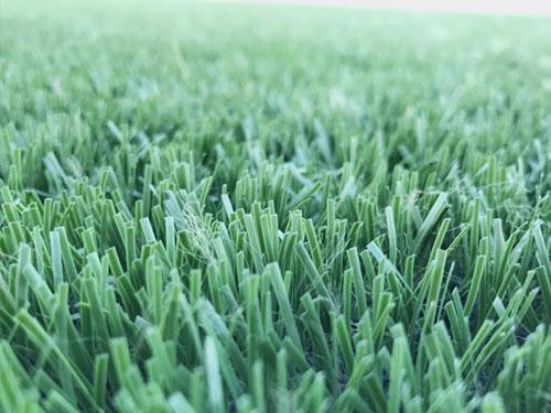 Cung cấp cỏ nhân tạo tại Hà Nội