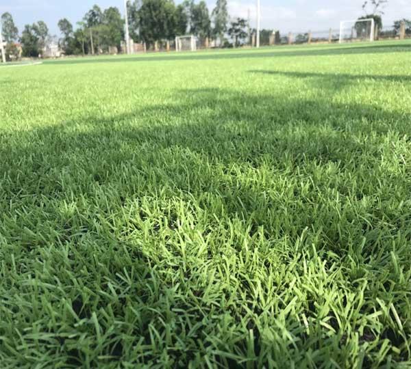 Chế độ bảo hành cỏ nhân tạo sau thi công và mua hàng