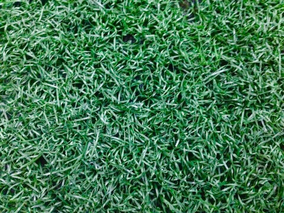 cung cấp cỏ nhân tạo