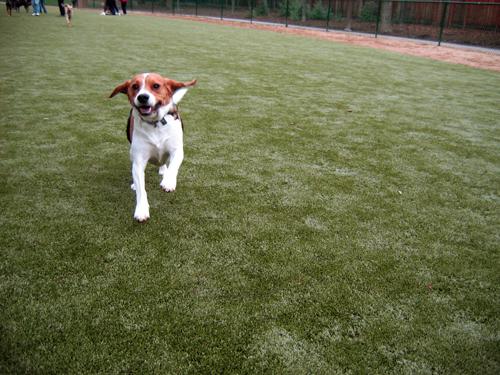 sân cỏ nhân tạo sân chơi dành cho thú cưng